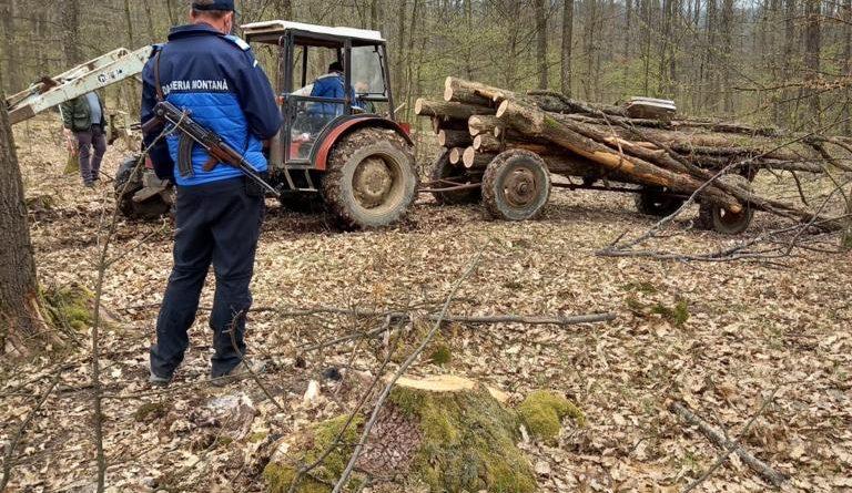 Tăiere nelegală de material lemnos depistată pe timpul unei acțiuni de patrulare aeriană